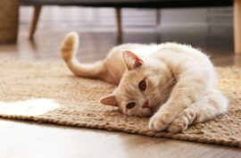 Signs That Your Cat Needs More Playtime