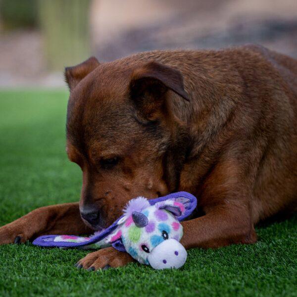 Shannon dog toys