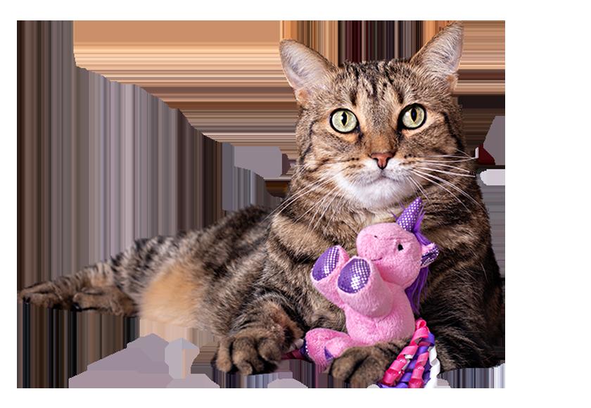 cat-toys