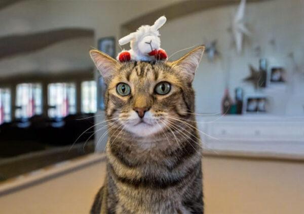 Lamb Chop® Cat Toy