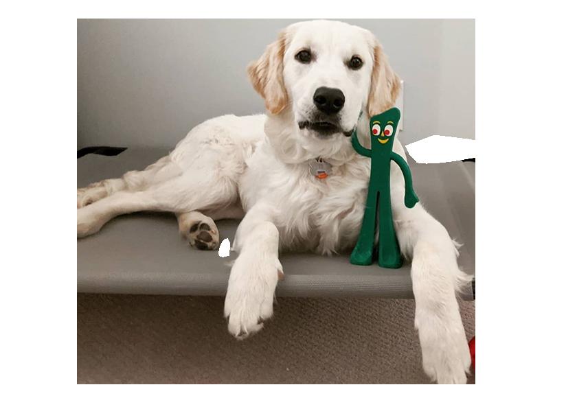 licensed dog toys