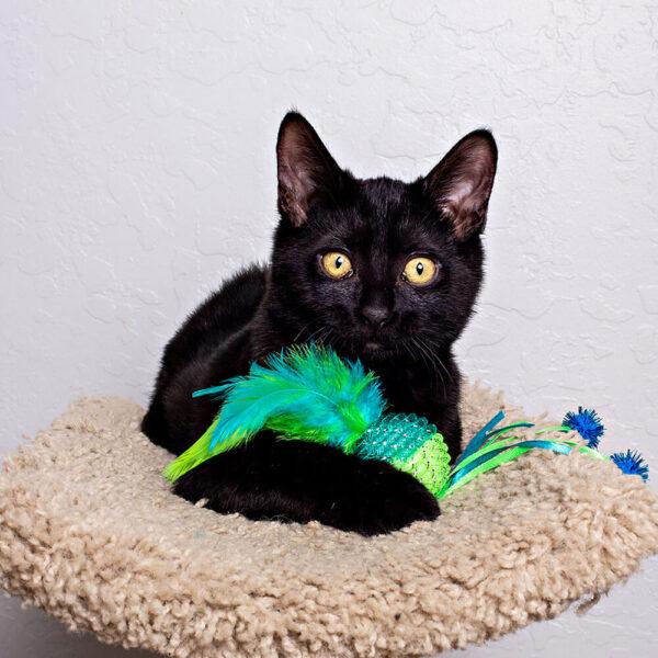 mesh-ball-cat