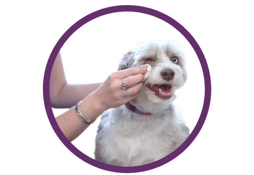 pet-care-banner-img