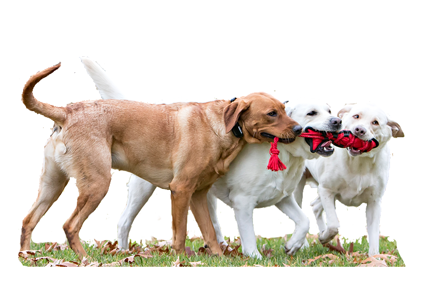 pet-toy-banner