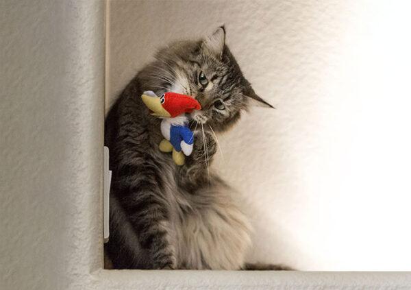 Woody Woodpecker Cat Toy